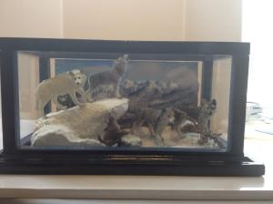 Wolf Diorama by Angie Zirbes