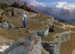 Terracedgardening_black_narcissus_blu-ray