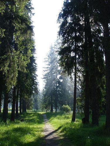 ForestofBorszek