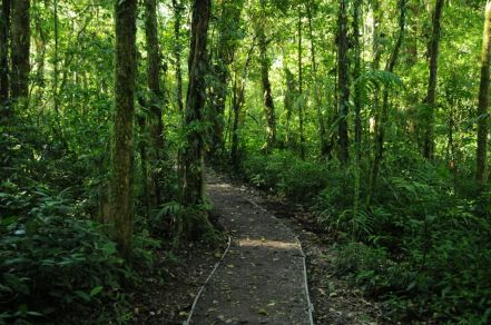 monteverde-cloud-forest-reserve
