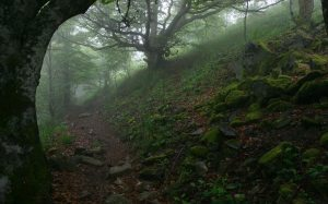 Royal_forests_in_England